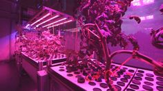 Future FOOD: How to feed cities of the future: MIT's Caleb Harper's CityFARM project: shallow + deep water cultures + aeroponics (plants without soil) through nutrient-rich misting mechanisms connected to servers + LED sun...