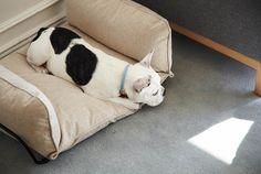 howlpot bespoke animal furnishings designboom