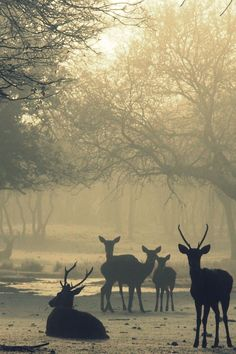 Siluetas En La Niebla