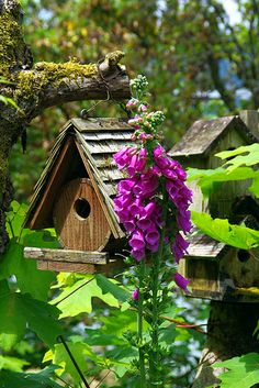 Lovely view of birdhouses!