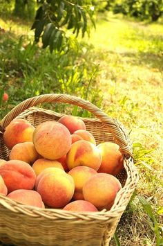 Nothing says outdoor fun like a fresh basket of peaches!