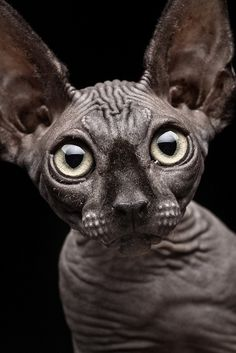 I wantz a naked me same big eyes and lemur sized head dis one perfect for me