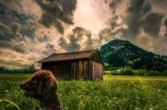 Be aware of the photo bombers. Cabin, Sunset, House Styles, World, Awesome, Cute, Pictures, Animals, Image