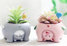 Hello Kitty House, Mini Bonsai, Apollo Box, Ceramic Plant Pots, Indoor Plant Pots, Succulent Pots, Planting Succulents, Pet Treats, Flower Pots