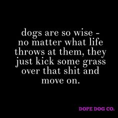 dogs are so wise - no matter what life throws at them, they just kick some grass over that shit and move on. #dopedogco #dopedog