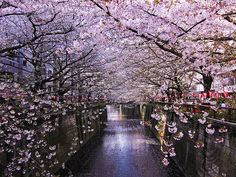 Megaro River, Japan  Have not been to Japan but so want to go!