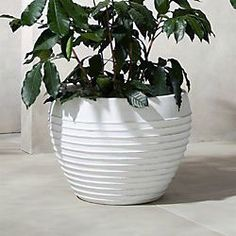 On sale. Large-scale terracotta planter spotlights a modern stripe from wide-rim top to bottom. Washed in white for a chic beachy feel. Resin Planters, Diy Planters, Modern Outdoor, Modern Planters Outdoor, Terracotta Planter, Galvanized Planters, Herb Garden In Kitchen, Indoor Planters, Blue Planter