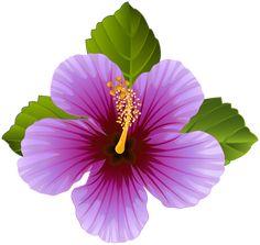 Purple Flower Transparent Clip Art Image – Famous Last Words Hawaiian Art, Hawaiian Flowers, Hibiscus Flowers, Tropical Flowers, Purple Flowers, Flower Images, Flower Art, Hibiscus Clip Art, Art Pictures