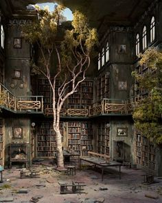 Abandon, room, tree, books, shelves