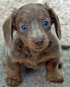 """Aren't you gonna pet me? Look into my baby blues and tell me you're gonna pet me!"" (via Pets Lovers)"