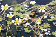 Kasvit kertovat | Suomen Luonto
