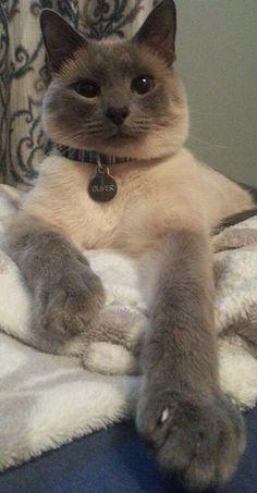 cat Cat memes - kitty cat humor funny joke gato chat captions feline laugh photo
