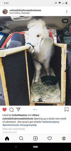Follow @Coloradotinyhorseadventures on Instagram. Miniature pony in a diy truck stall.   (None of the photos are mine and I do not claim to own them.) They are just minature horse therapy inspiration. Miniature Ponies, Horse Therapy, Pony, Miniatures, Trucks, Horses, Photos, Animals, Inspiration