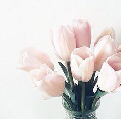 Stunning Tulip