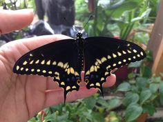 My 2nd Butterfly