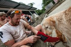 Stray Dog Found In The Jungle Treks Miles With Adventure Team To His Forever Home