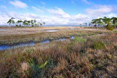 Salt Marsh at Carrabelle 3