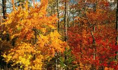 Alabama Fall Color Trail - driving route