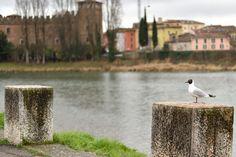 https://flic.kr/s/aHskuy2HPC | Verona ultimi giorni d'inverno | Scatti in compagnia del mio gruppo di Fotografi Fotoalle8
