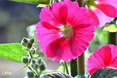 Plants, Photos, Planters, Plant, Planting, Cake Smash Pictures
