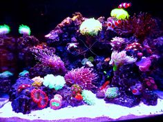 Check out my 4 month old Saltwater Nano Reef Aquarium Fish Tank Biocube I used Panorama Pro Module Lighting from Ecoxotic to achieve different color comb. Saltwater Aquarium Beginner, Saltwater Aquarium Fish, Nano Aquarium, Saltwater Tank, Saltwater Fishing, Aquarium Ideas, Coral Reef Aquarium, Marine Aquarium, Coral Reefs