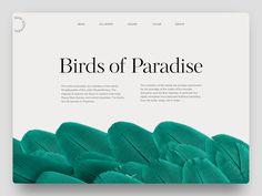 Brids of paradise tubik