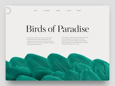 Brids of paradise tubik
