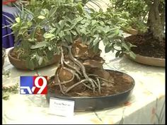 Bonsai plant exhibition at  i Labs