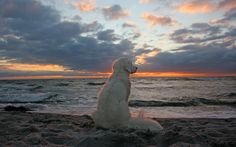 Find peace at the beach... #Beautiful #Canine #Photography