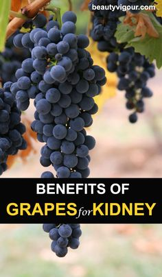 Benefits Of Grapes For Kidney Health