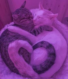 Cute Baby Cats, Cute Kittens, Cute Baby Animals, Cats And Kittens, Funny Animals, Cat Aesthetic, Purple Aesthetic, Purple Animals, Cat Hug