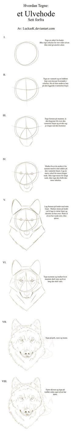 Wolf head tutorial, front - Norwegian by CasArtss
