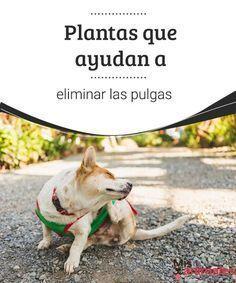 Como Acabar Con Las Pulgas En El Jardin Plantas Que Ayudan A Eliminar Las Pulgas Pulgas Perros Perros Y