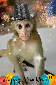 Happy new Year monkey style at Dade City's Wild Things