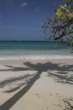 #Martinique : plage des Salines - France
