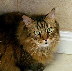 Kotik was adopted!