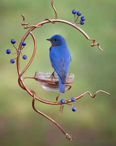 This bluebird feeder is designed like a small copper wreath with blue berries.  A glass bowl for mealworms fits securely in a copper coil.  The bowl can be removed for filling and cleaning.  This feeder is 14 inches long and 10 inches wide at its largest points.  Each feeder may vary  slightly as each is handmade.  THE BLUEBIRD PHOTOS ARE OF BIRDS USING A SIMILAR STYLE FEEDER I MADE.  This feeder is a complete circle. Bird House Feeder, Diy Bird Feeder, Humming Bird Feeders, Homemade Bird Houses, Homemade Bird Feeders, Garden Crafts, Garden Projects, Bird Bath Garden, Garden Whimsy