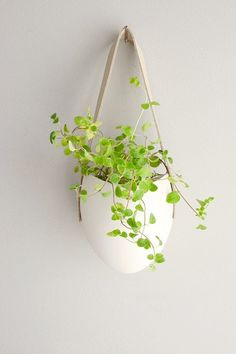 Plant in an eggshell! #Easter #Coco : re-pinned by Tempo Pilates www.tempopilates.com