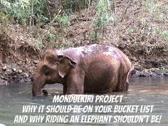 Mondulkiri Elephant Project - Things to do in Cambodia (and why you should take elephant riding off your bucket list. Stuff To Do, Things To Do, Elephant Ride, Before I Die, Great Photos, Places Ive Been, Traveling By Yourself, Vietnam, Travel Tips