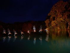 Photo: Multiple exposure of a bulldog bat flying over water. Photograph by Christian Ziegler