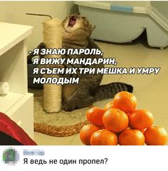Я ведь не одна пропела? Funny Cats And Dogs, Bad Cats, Stupid Memes, Funny Jokes, Russian Jokes, Bts And Exo, Life Memes, Man Humor, Good Mood