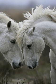 """☀""""Säugetiere Pferde"""" by okapia Okapia"""