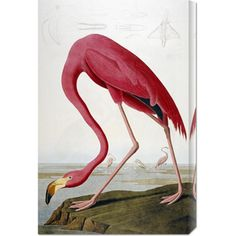 @Overstock - This hand crafted stretched canvas of John James Audubon, 'American Flamingo' is a museum quality reproduction of the original work. Shipped to you finished and ready-to-hang, it is a welcome addition to any type of decor.http://www.overstock.com/Home-Garden/John-James-Audubon-American-Flamingo-Stretched-Canvas-Art/7572073/product.html?CID=214117 $104.99