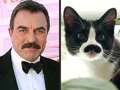 The only man/cat who can rock a good 'stache. Haha