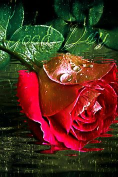 Good Morning Rainy Day, Good Day, Day For Night, Morning Images, Morning Pictures, Good Morning Gif Animation, Happy Weekend Images, Love Heart Gif, Rose Flower Wallpaper
