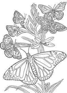 Butterfly Coloring Page for Adults Butterfly Coloring Page for Adults. butterfly Coloring Page for Adults. Coloring Pages butterfly Coloring Pages for Adults Gravity in butterfly coloring page Butterfly Coloring Page for Adults Difficult Coloring Pages butterfly Of Butterfly Coloring Page for Adults Butterfly Coloring Page, Butterfly Drawing, Flower Coloring Pages, Unique Coloring Pages, Free Adult Coloring Pages, Free Coloring, Coloring Sheets, Coloring Books, Butterfly Template