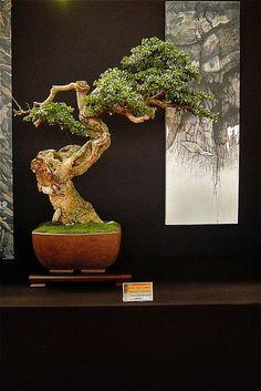 European bonsai San Show Saulieu France Unique Trees, Unique Plants, Exotic Plants, Small Trees, Exotic Flowers, Bonsai Art, Bonsai Plants, Bonsai Garden, Ikebana