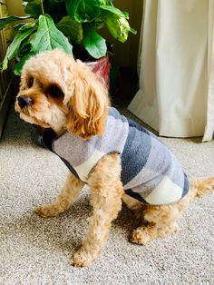 Dog Fleece Pullover/Sweater/Jacket/Coat Staffy Pups, Shitzu Puppies, Cute Dogs And Puppies, Baby Puppies, Baby Dogs, I Love Dogs, Retriever Puppies, Puppies Tips, Cutest Dogs