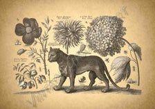 Leopard i kwiaty clip art rocznika cyfrowe Pobierz ilustracja Decoupage, Moose Art, Clip Art, Animals, Vintage, Animales, Animaux, Animal, Vintage Comics