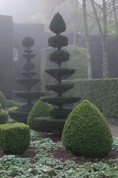 Topiary in the mist.